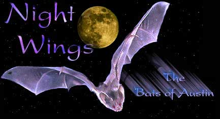 Austin Bats - Night Wings